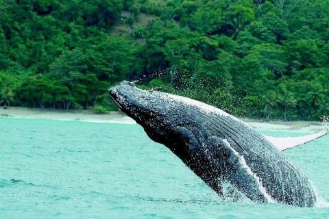 Ballenas en Puntarenas