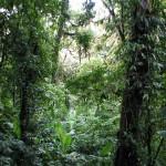 Monteverde1