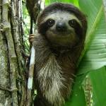 Fauna Limon Costa Rica