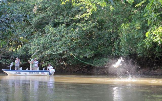 Sabalo Limon Costa Rica